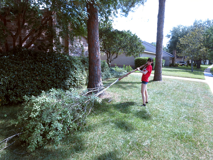 Timber! How to Trim Your Own Trees - evanandkatelyn.com