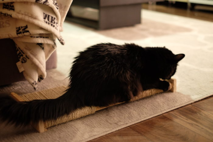 DIY Cat Scratching Post - evanandkatelyn.com